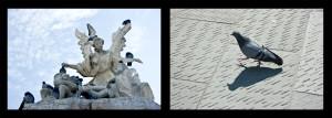 La regina dei piccioni - Trieste