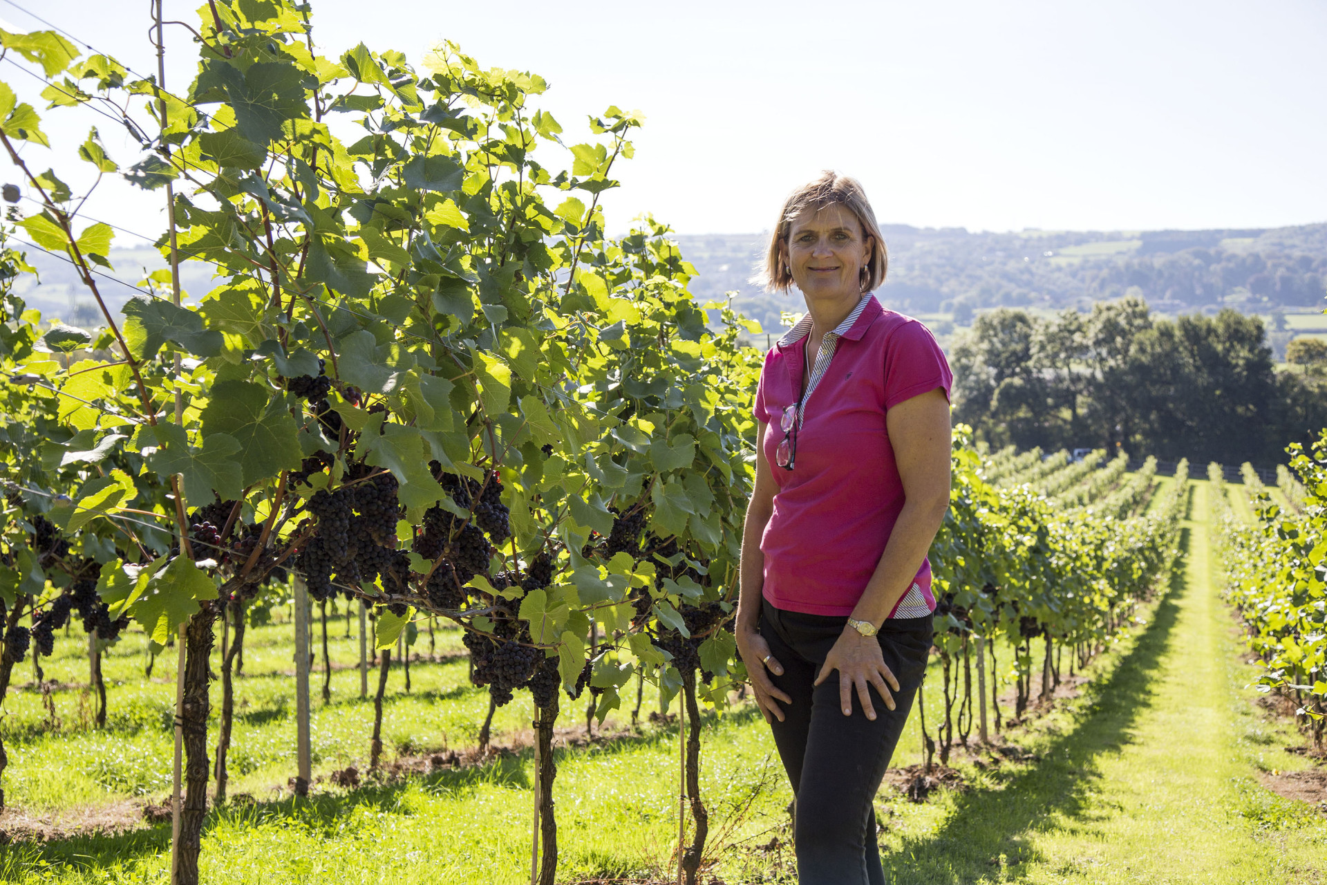 Vineyard Aldwick, English wine